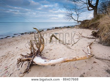 Rocky Sea Shore With Driftwood At Sunrise. Beautiful Seascape