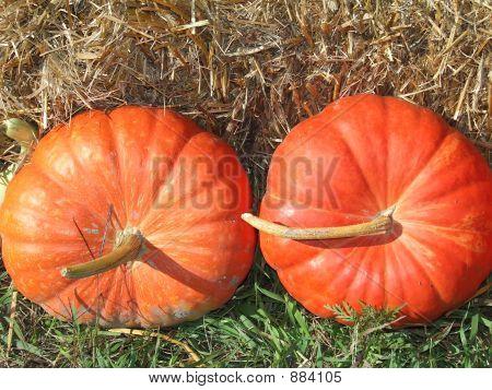 Pumpkin Squash Gourd