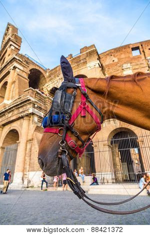 Colosseum And A Horse In Rome