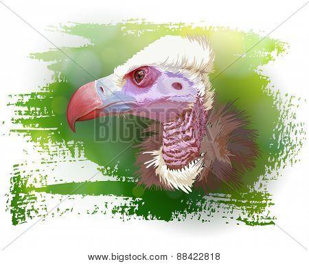 Vulture portrait & green background. Vector illustration / Eps10