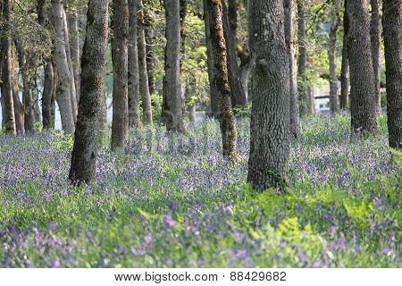 Camas Meadow