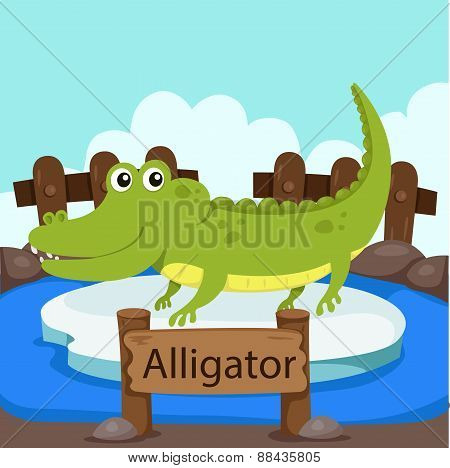 Illustrator of Alligator in the zoo