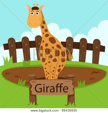 Illustrator of Giraffe in the zoo