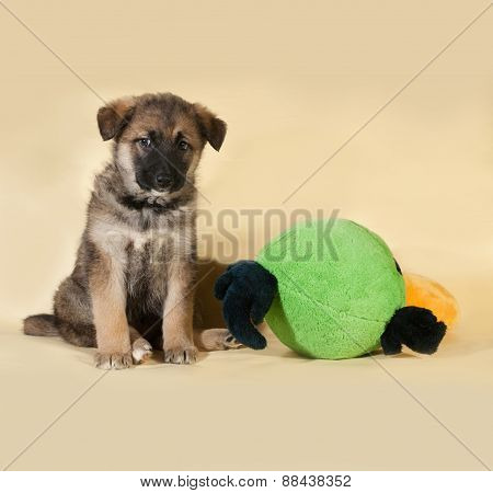 Brown puppy sitting with toy on yellow
