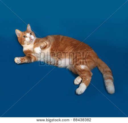 Red And White Cat Lying On Blue