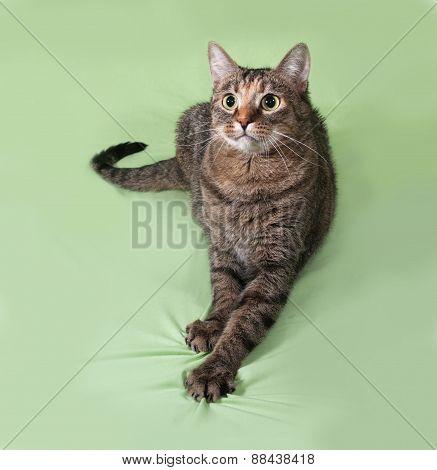 Tabby Cat Sitting On Green
