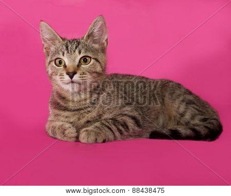 Striped Kitten Lying On Pink