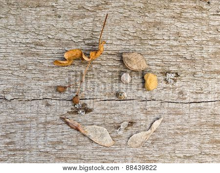 The composition of last year's plants, stones and shells on a background of the old wooden boards