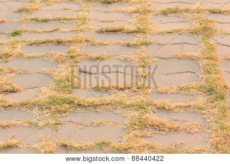 Walkway With Grass Growing