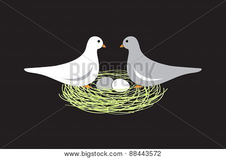 Birds In Nest With Eggs On Black Background