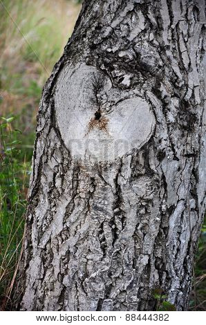Natural Heart Shaped Rough On A Tree Trunk