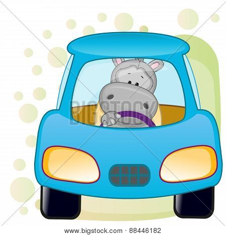 Hippo In A Car