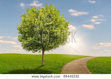 Tree On A Green Meadow With A Path At Sunset