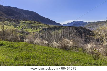 Spring In The Mountains Near The Village Of Lahij Azerbaijan