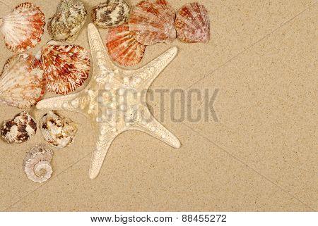 Seashore Scene With Starfish And Seashells