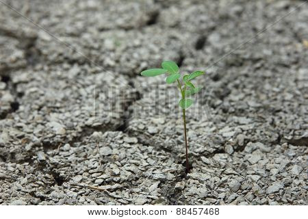 Tree growth in cracked soil