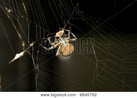 Spider and prey close up
