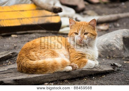 Lonely cat lying in the yard