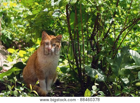 Lonely cat standing in the garden
