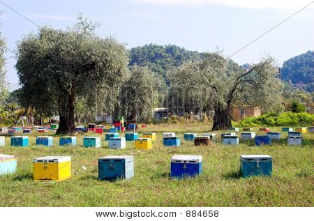 Bee Boxes And Olive Trees