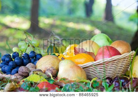 Basket full of autumn fruits