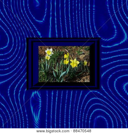 narcissus in blue black stylized op art frame