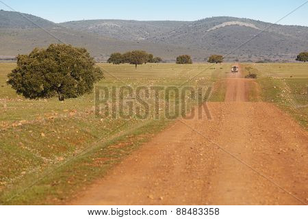 Dirty Road In A Mediterranean Meadow. Cabeneros, Ciudad Real. Spain