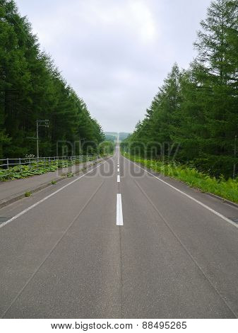 Long Straight Road Of Kaiyodai In Hokkaido, Japan