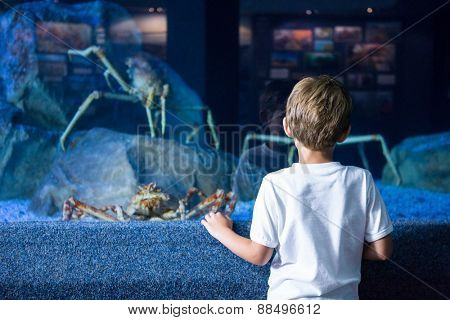 Young man looking at giants crabs in a tank at the aquarium