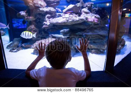 Young man touching a fish-tank behind the camera