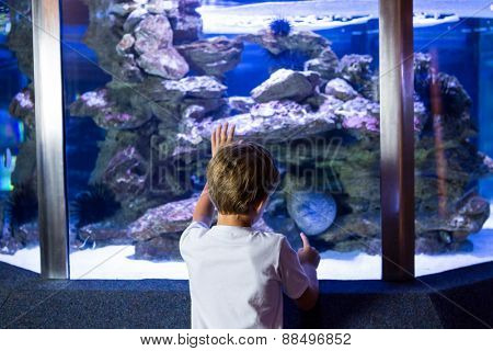 Young man looking at sea snake in a tank at the aquarium