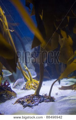 Fish hiding into yellow algae at the aquarium