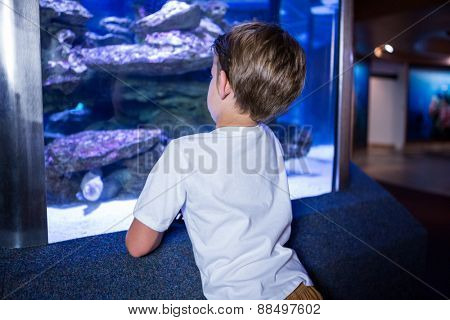 Young man looking at fish in a tank behind camera at the aquarium