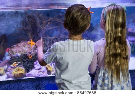 Children looking at starfish in tank at the aquarium