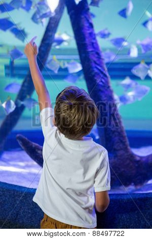 Young man pointing a fish with his finger behind camera at the aquarium