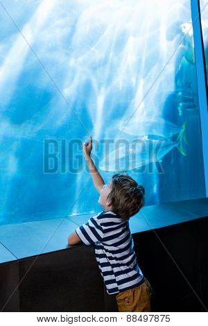 Young man pointing something with his hand in a tank at the aquarium