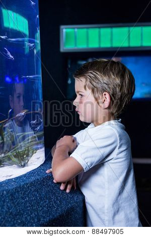 young man looking at fish in tank at the aquarium