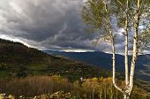 picture of serbia  - Illuminated birch tree against dark clouds before a storm on Radocelo mountain - JPG