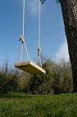 picture of tall grass  - Tree swing in the garden with a tall tree blue sky and green grass - JPG