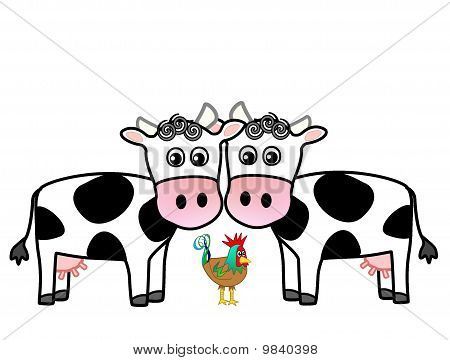 Cute cows and a rooster