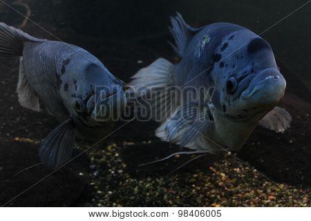 Aquarium fish dolphin