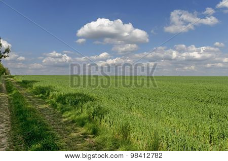 Ploughing field and dirt road