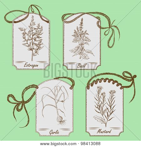 Cooking herbs and spices. Hand drawn vector illustration