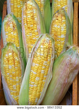 Corn cobs in the wooden box.