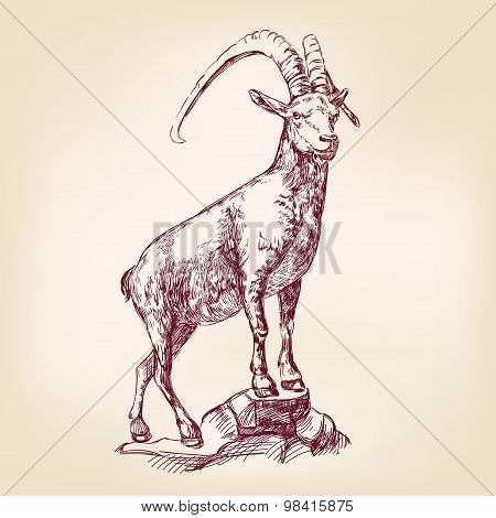 goat hand drawn vector llustration