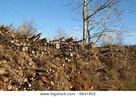 Harvested Wood Waste For Fuel And Energy