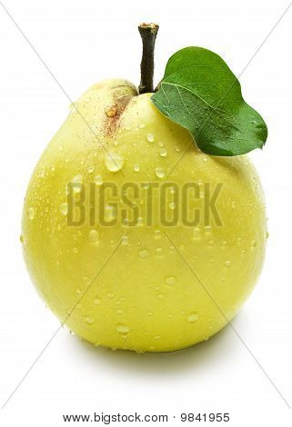 Quince with green leaf