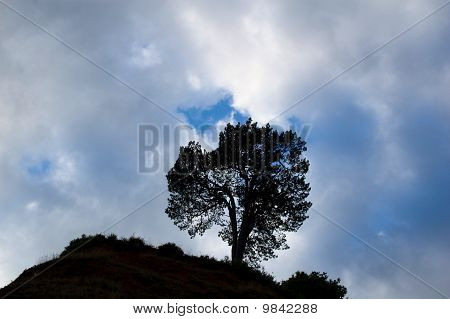 Silhouette Of A Tree On Cloudy Sky