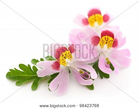 Three Flowers