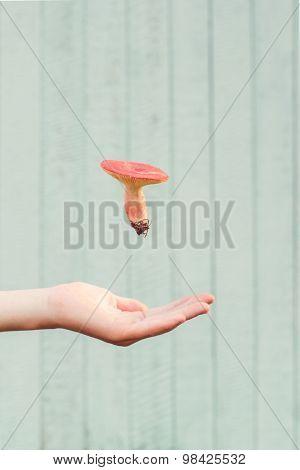 Edible mushroom levitating